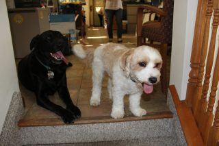 Have a wonderful Thanksgiving from our SLDC furry friends Bo & Buddy!
